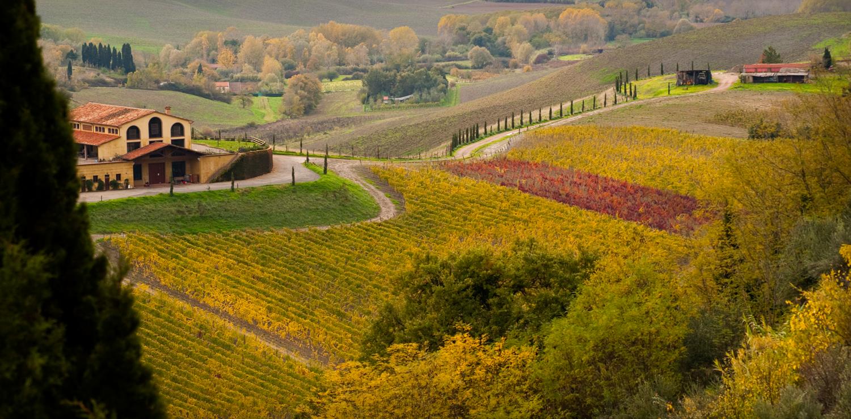 Consorzio Vino Chianti